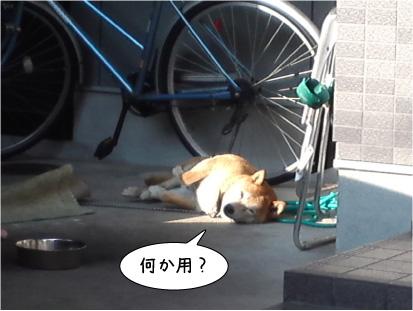 ぽちくん2.jpg