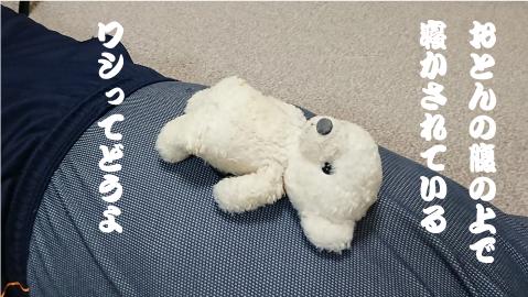 ウチのクマが寝てるところ.png