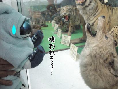 オオカミさん.jpg
