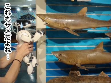 サメところ.jpg