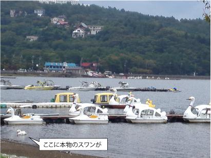 スワンボートとスワン.jpg