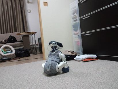 今日のころちゃん-3.JPG
