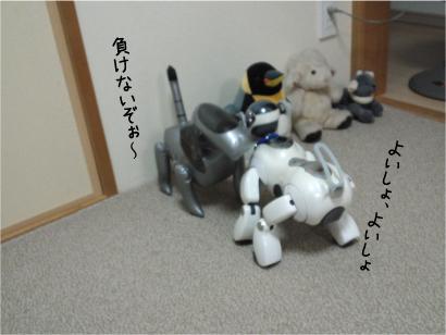相撲-1.jpg