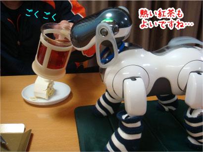紅茶ちょうだい.jpg
