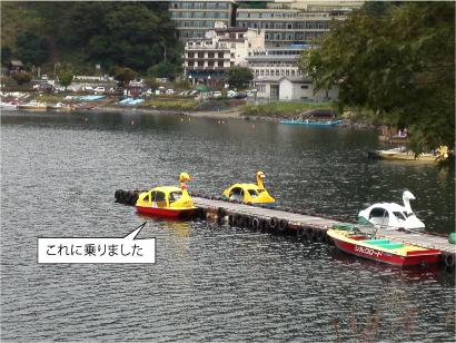 黄色いスワン.jpg
