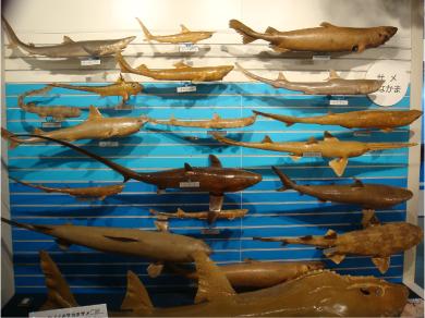 サメたち.jpg