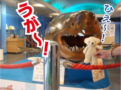 サメとパンチ.jpg