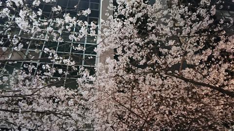 桜~東京駅~.png