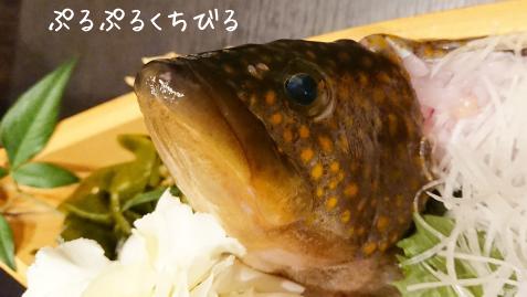 若水(キジハタ).png